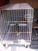 Odchycená kočka a její převoz v převozní kleci na veterinární kliniku v převozní kleci