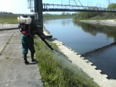 Likvidace plevelů na březích řek