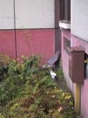 Toulavé kočky kolem panelových domů